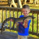 Gator_smaller