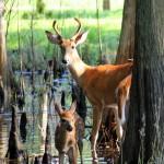deer_smaller