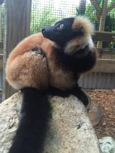 New Lemur 3 smaller