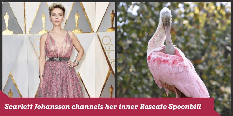 Scarlett Johansson channels her inner Roseate Spoonbill