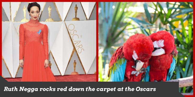 Ruth Negga rocks red down the carpet at the Oscars
