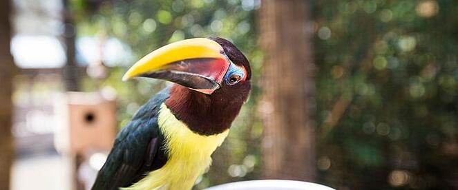 Wildlife Parks in Florida