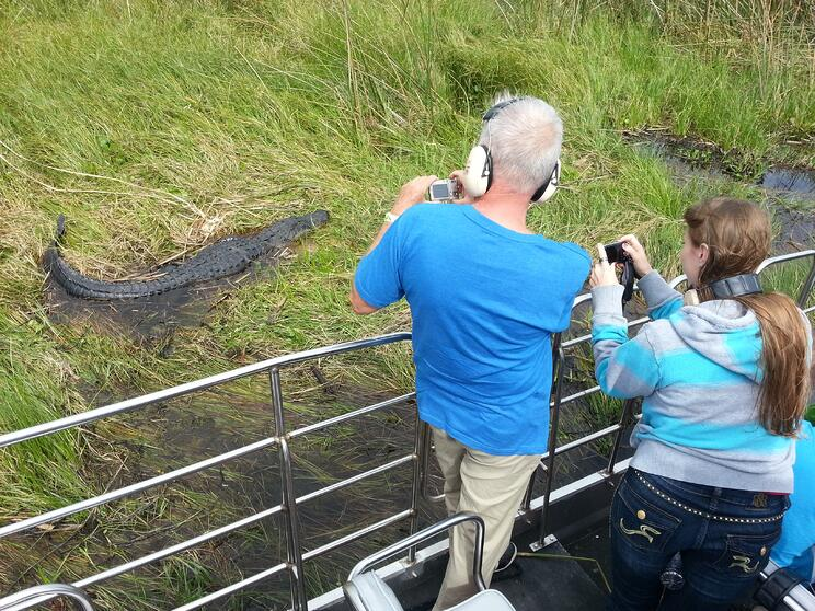 Alligator on airboat ride