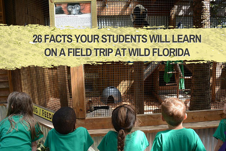 28_facts_your_your_students_will_learn_on_a_field_trip_at_Wild_Florida-1.png
