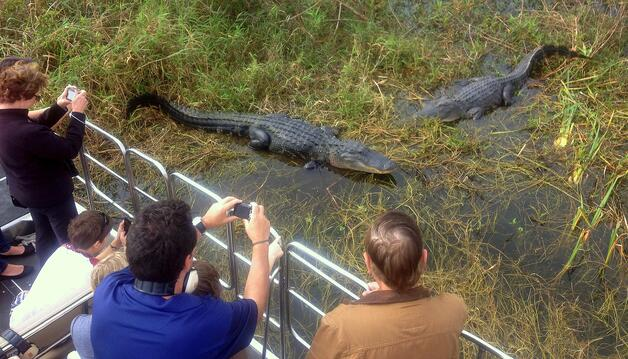 Guest taking pictures of alligators during an Orlando airboat tour