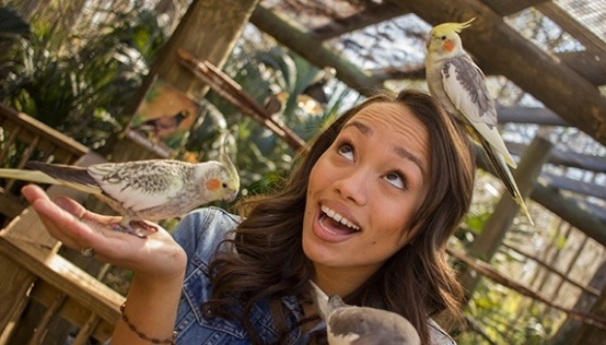 Woman playing with small birds in bird aviary at Wild Florida