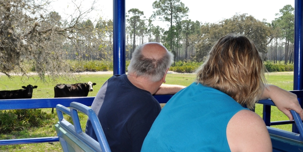 ranch buggy tour at wild florida