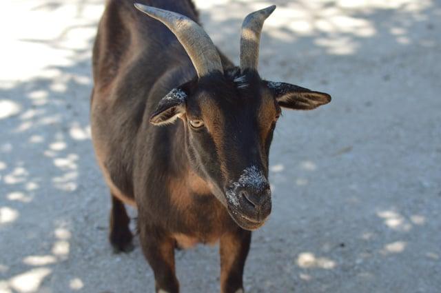Petting zoo at Wild Florida