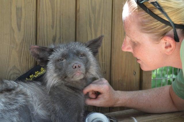 Fox with animal keeper
