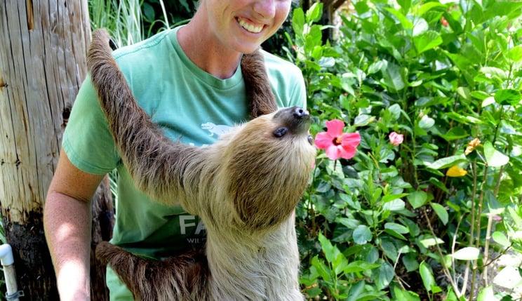 VIP Sloth Experience