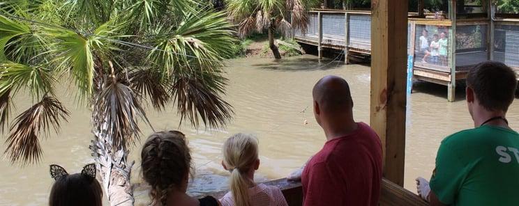 Gator Encounter at Wild Florida