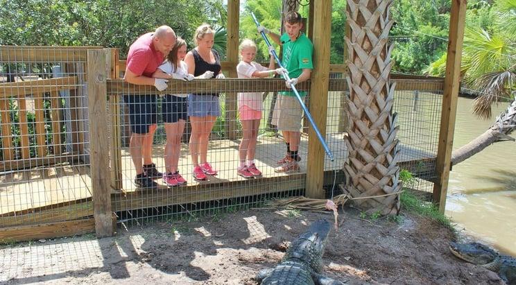 Gator Encounter in Florida