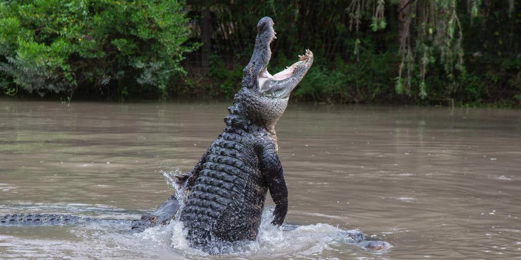 Gator Jumpathon during Gator Week at Wild Florida