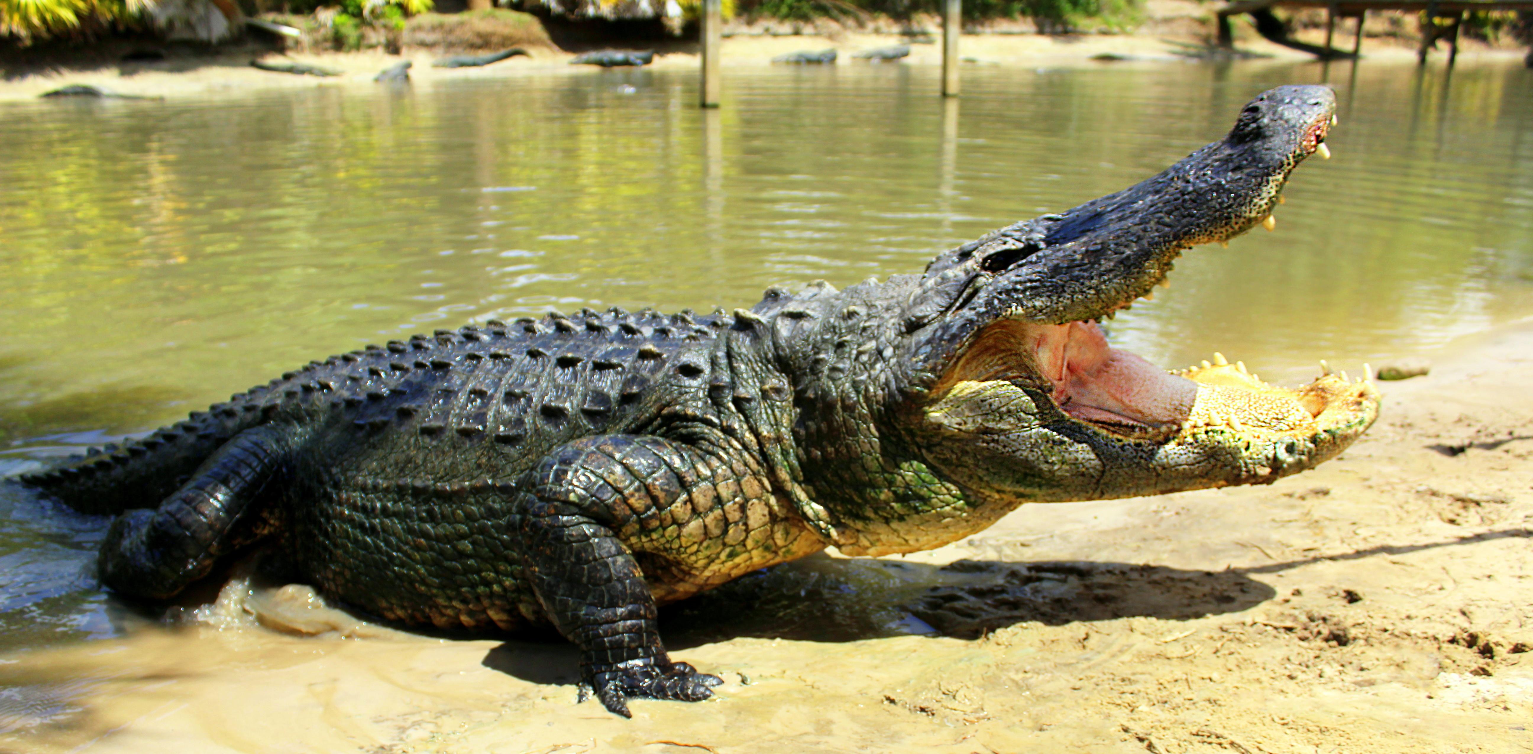 Gator Week