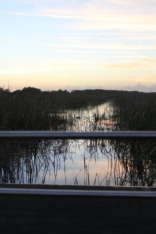 Sunset on an Orlando airboat ride