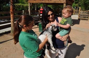 Wild Florida Petting Zoo