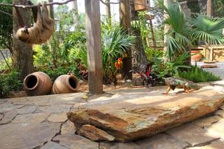Sloth and iguana at Wild Florida Wildlife Park