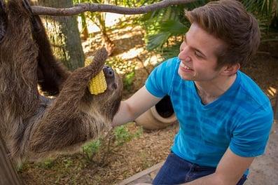 slothie
