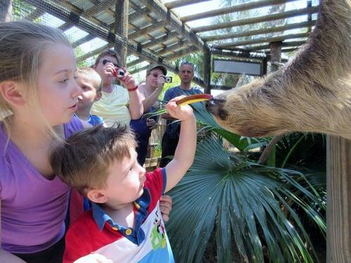 sloth encounters