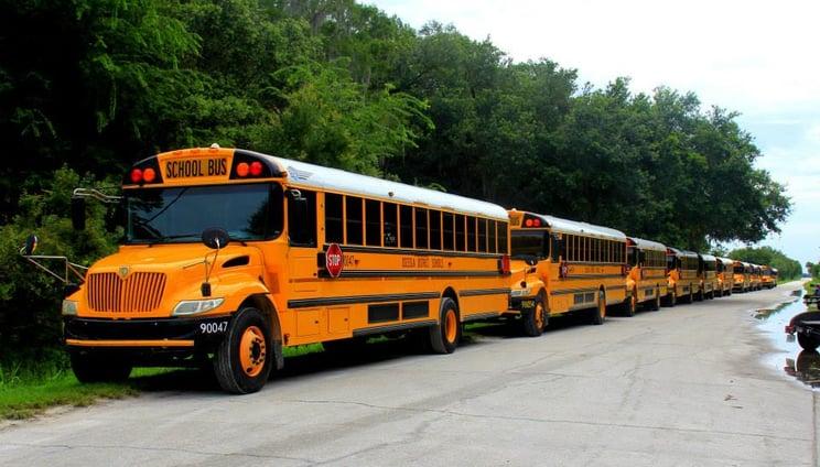 Wild_Florida_Busses.jpg