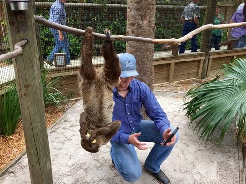 Wild_Florida_Slothie.jpg
