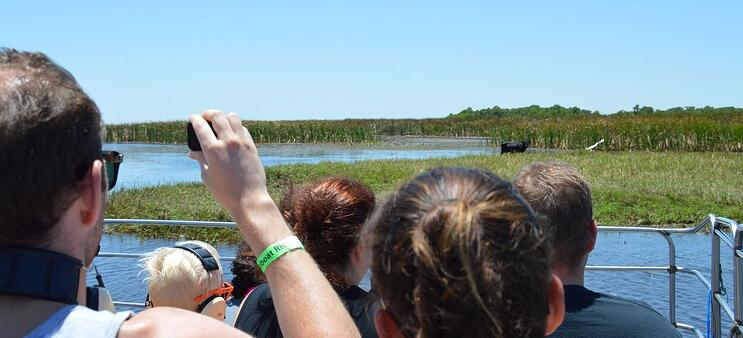 Guest getting a glimpse of a large cow while on airboat tour in Orlando at Wild Florida