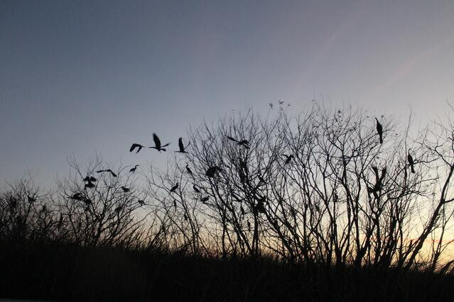 birds at sunset on lake cypress from orlando airboat