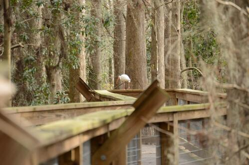 Hawk Swamp at Wild Florida