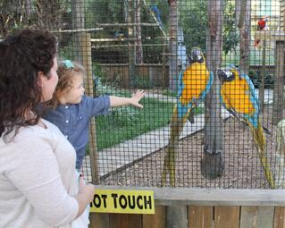bird aviary at Wild Florida's Wildlife Park