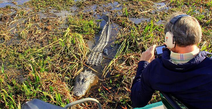 Florida-airboat-tour-alligator