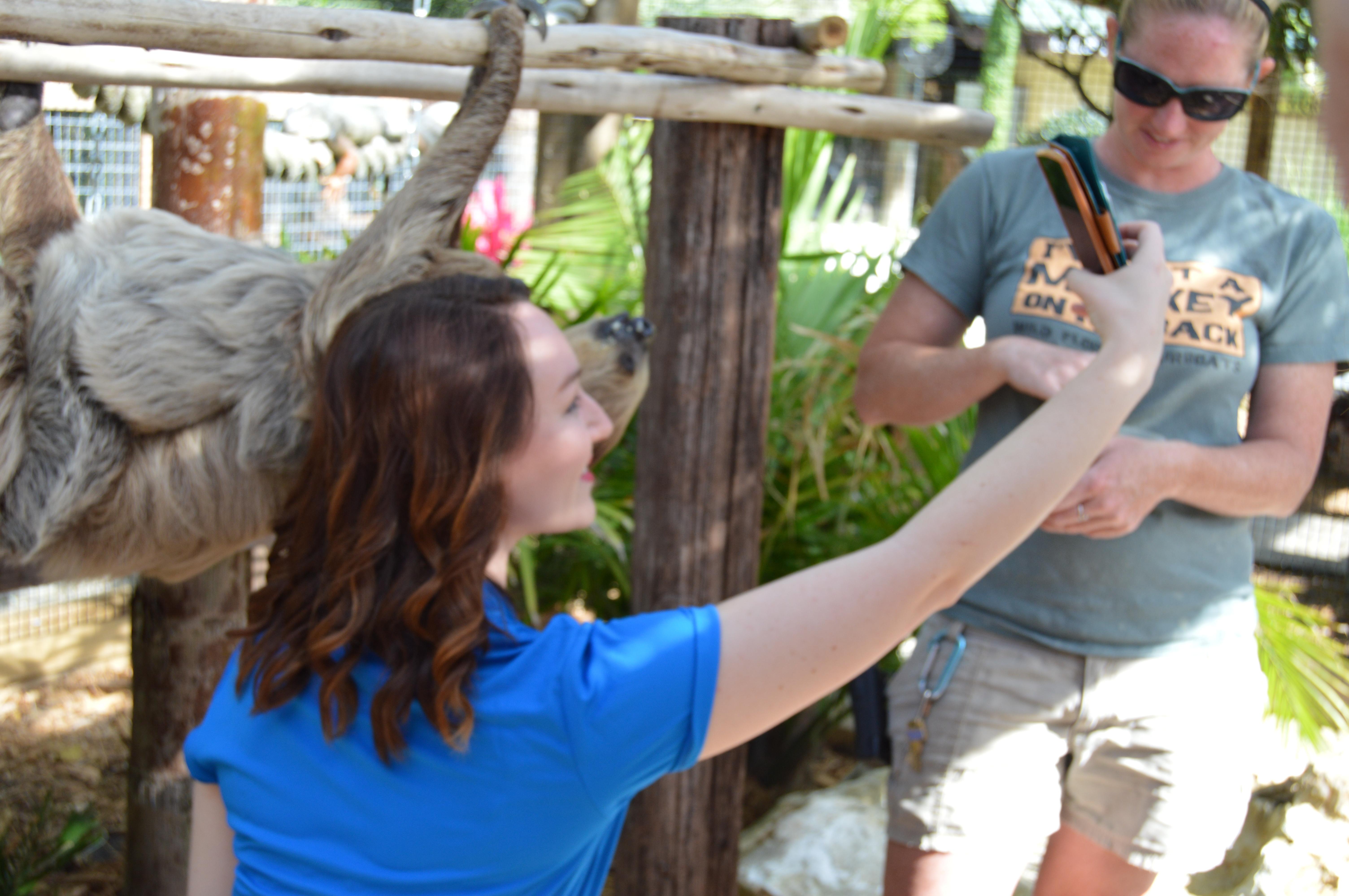 #slothie at Wild Florida