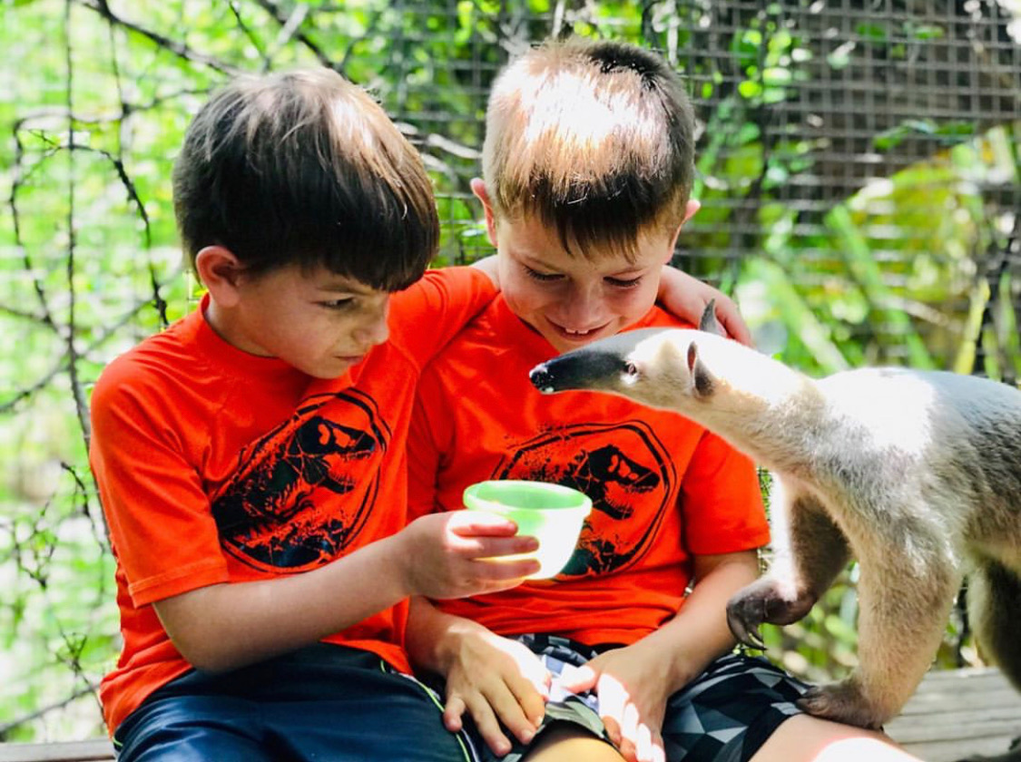 2 boys feeding a Tamandua at a wild life park